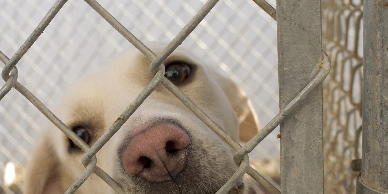 Abandons d'animaux : les réseaux sociaux montent au front